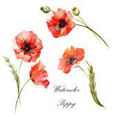 Watercolor poppy painting — Stock Photo