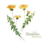 Watercolor, dandelion plant — Foto de Stock
