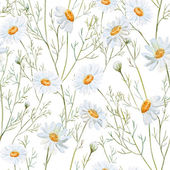 Watercolor chamomile background — Stock Photo