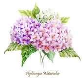Watercolor hydrangea flowers bouquet — Stock Vector