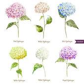 Hydrangea Watercolor flowers pattern — Stock Vector
