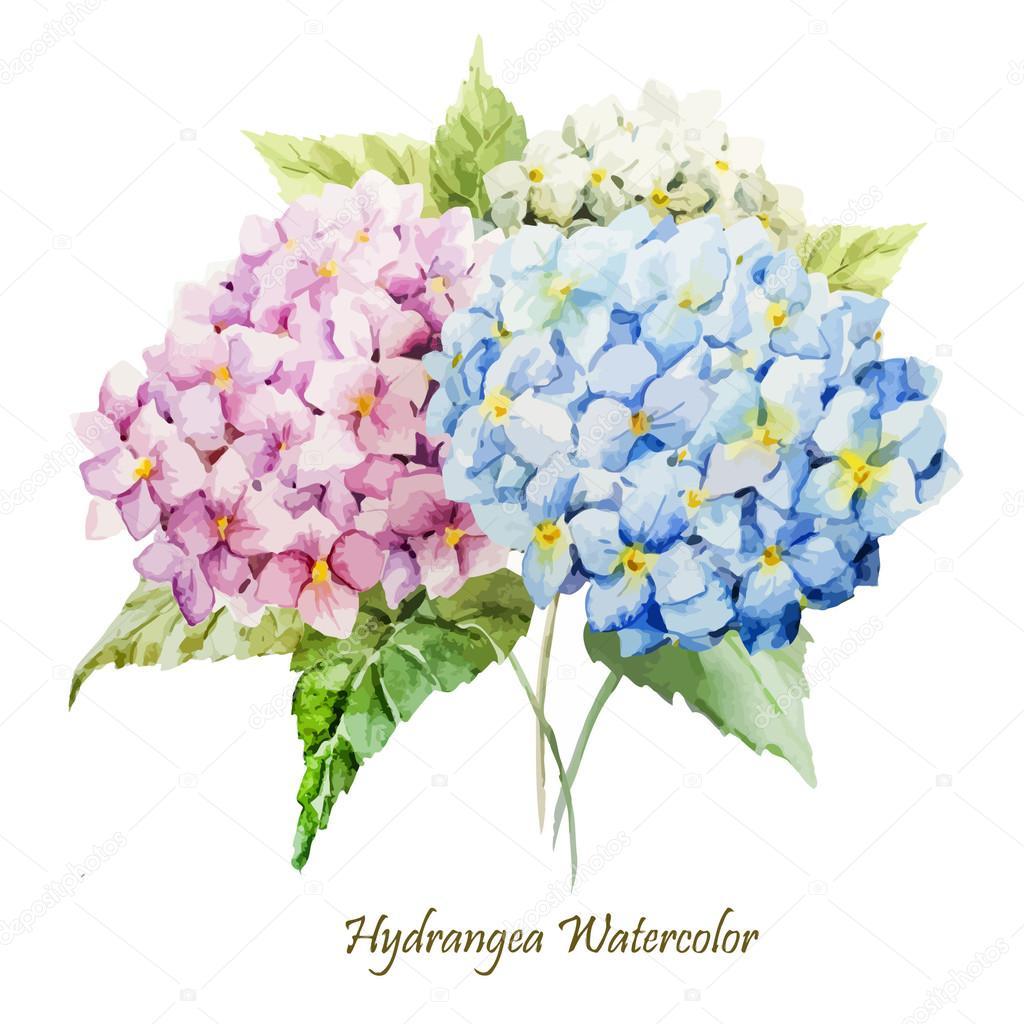 Watercolor hydrangea flowers bouquet stock vector for Colore ortensia