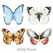 Watercolor butterflies hand-drawn — Stock Photo