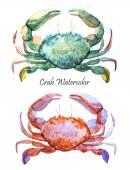 Watercolor ocean crabs — Stock Photo