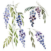 Watercolor wisteria texture — Stock Vector