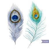 Peacock feather — Stock Vector