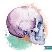 Nice skull — Stock Vector