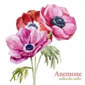 Anemones — Stock Vector