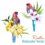 Tropical birds — Stock Vector #67683447