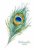 Belle plume — Vecteur