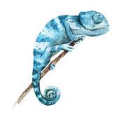 Chameleon — Stock Vector