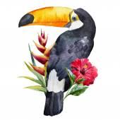 Watercolor toucan — Stock Vector