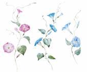 Gentle watercolor flowers — Stock Vector