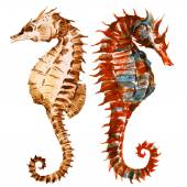 Watercolor seahorses — Stock Vector