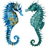 Watercolor seahorses — Stock Vector