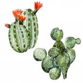 Watercolor cactus — Stock Vector