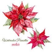 Poinsettia flower — Stock Vector