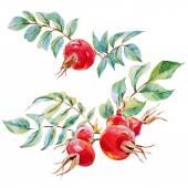 Watercolor vector dogrose flowers — Stock Vector