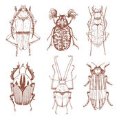 Nice vector hand drawn beetles — Stock Vector