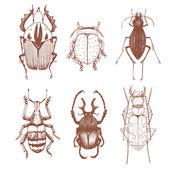 Ницца вектор рука нарисованные жуков — Cтоковый вектор
