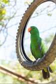 Green parrot in wild life breeding center — Stock Photo