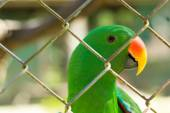 Green parrot behide cage in wild life breeding center — Stock Photo