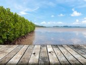 Mangrove forest in the tropical place with wood floor — Stock Photo