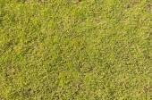 Green Grass. Textures and backgrounds — Stock Photo