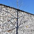 Shadow of a tree on the white stone wall — Stock Photo #66564959