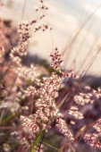 Tiny flower grass at relax time. soft focus. pastel color — Stock fotografie