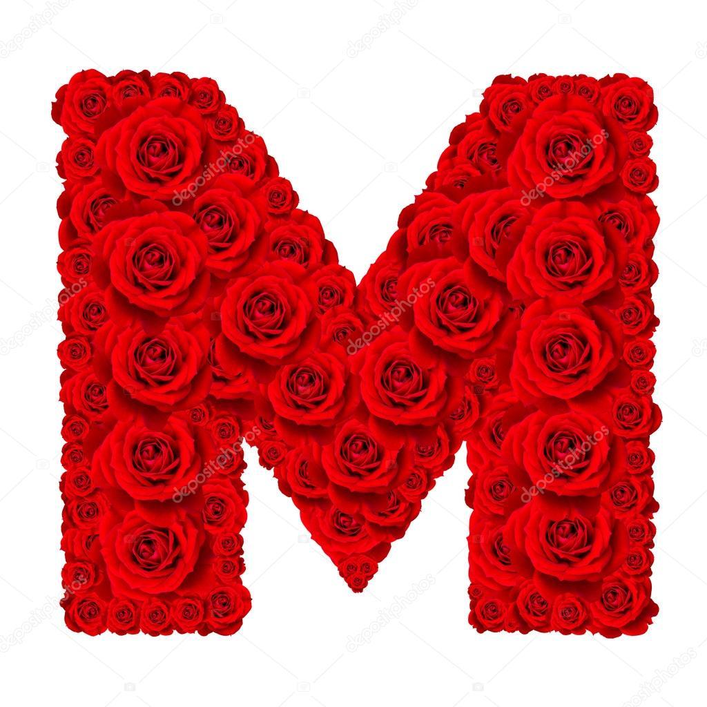 Красная роза на белом фоне фото