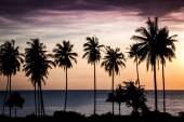 Tropical sunset over sea with palm trees — Stockfoto