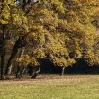 Autumn time yellow and brown colors in a park — Stock Photo #58142041