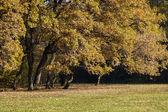 Herbst Zeit gelbe und braune Farben in einem park — Stockfoto
