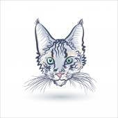 Face of a cat on the white — Stock Vector