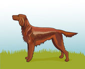 Realistic irish setter — Vector de stock