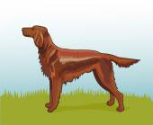 Realistic irish setter — Stockvektor