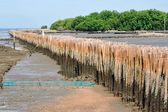 Bamboo barrier to protect the coast — Stock Photo
