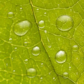 Water drops on green leaf — Stockvector