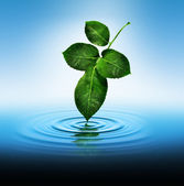 Leaf Touching Water — Stock Photo