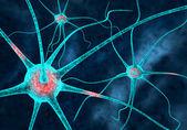 Neurons — Stock Photo