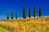Tuscany Trees Landscape — Stock Photo