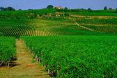 Tuscany  Wine Farm House — Stock Photo