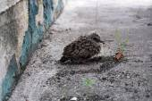 Little tender scared bird near a city wall is waiting for the shopping — Stock Photo