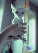 Clean kitten — Stock Photo