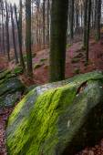 Blockfield in odenwald Germany — Stock Photo