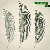 Hand drawn palm leaves — Stock Vector