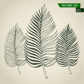 Hand drawn palm leaves — Vector de stock