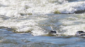 Kayaking in the Rapids of the Fraser River in the Fraser Canyon — Stock Photo