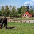 Mare and Filly Grazing in a Meadow — Stock Photo #75589533